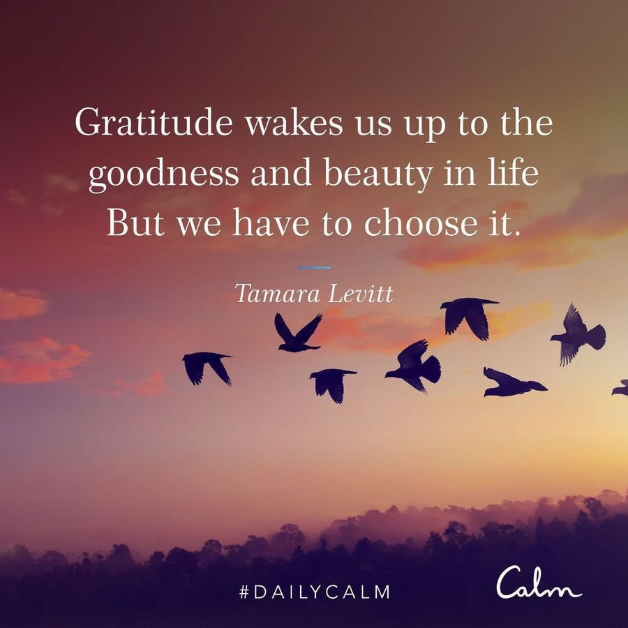 gratitude message in front of an image of seaguls
