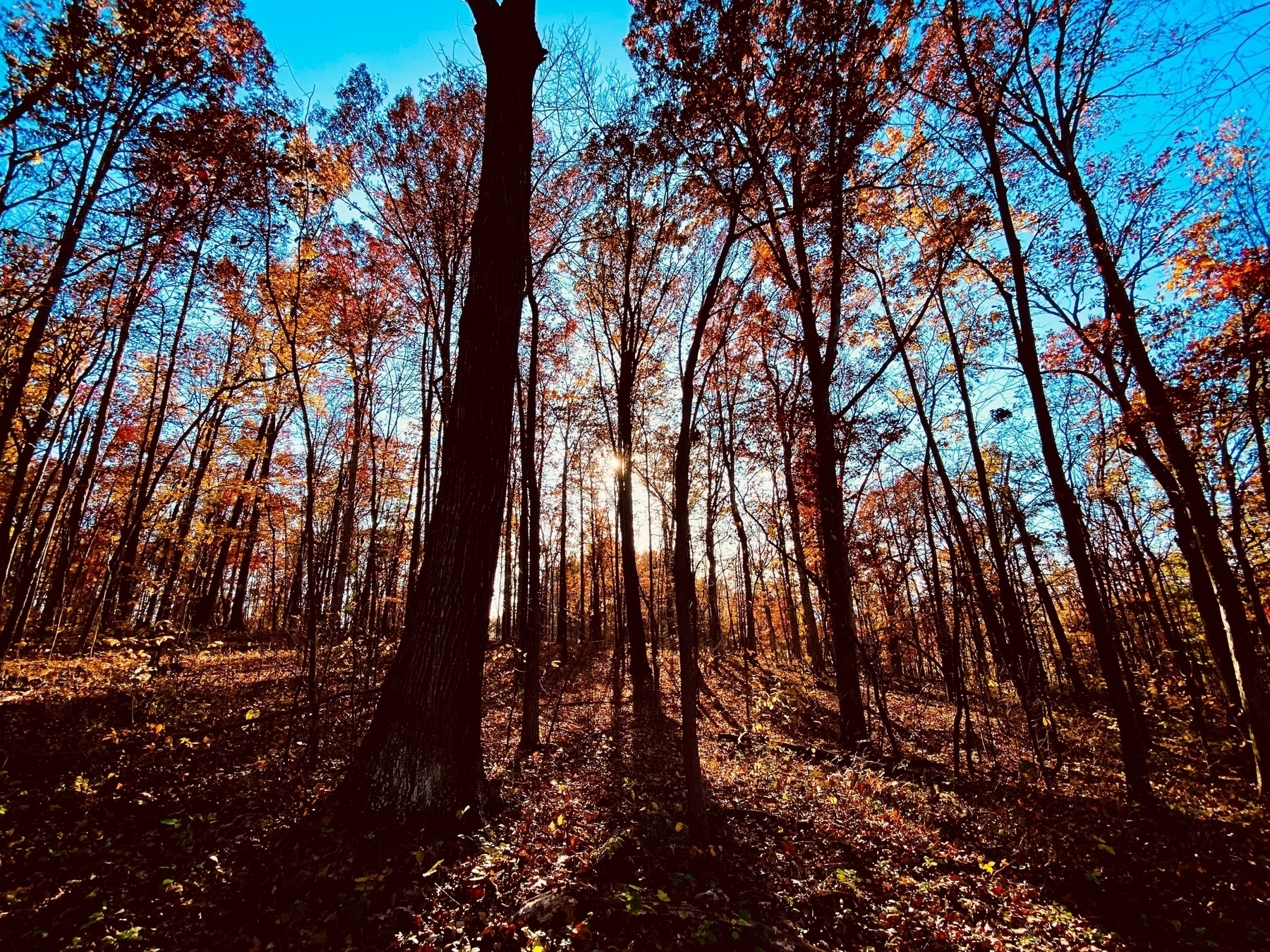 Forrest of trees in Fall