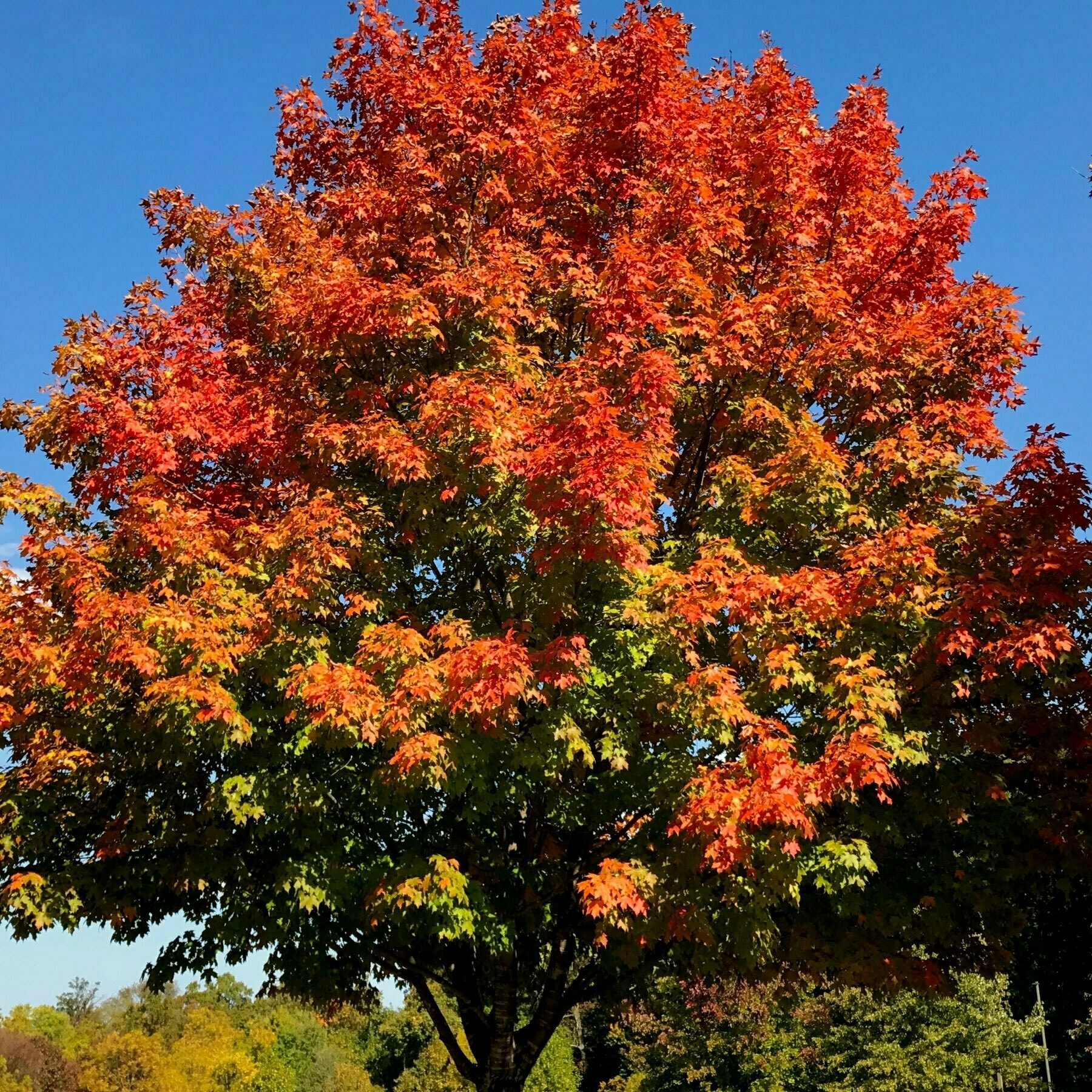 tree with colorful leaves