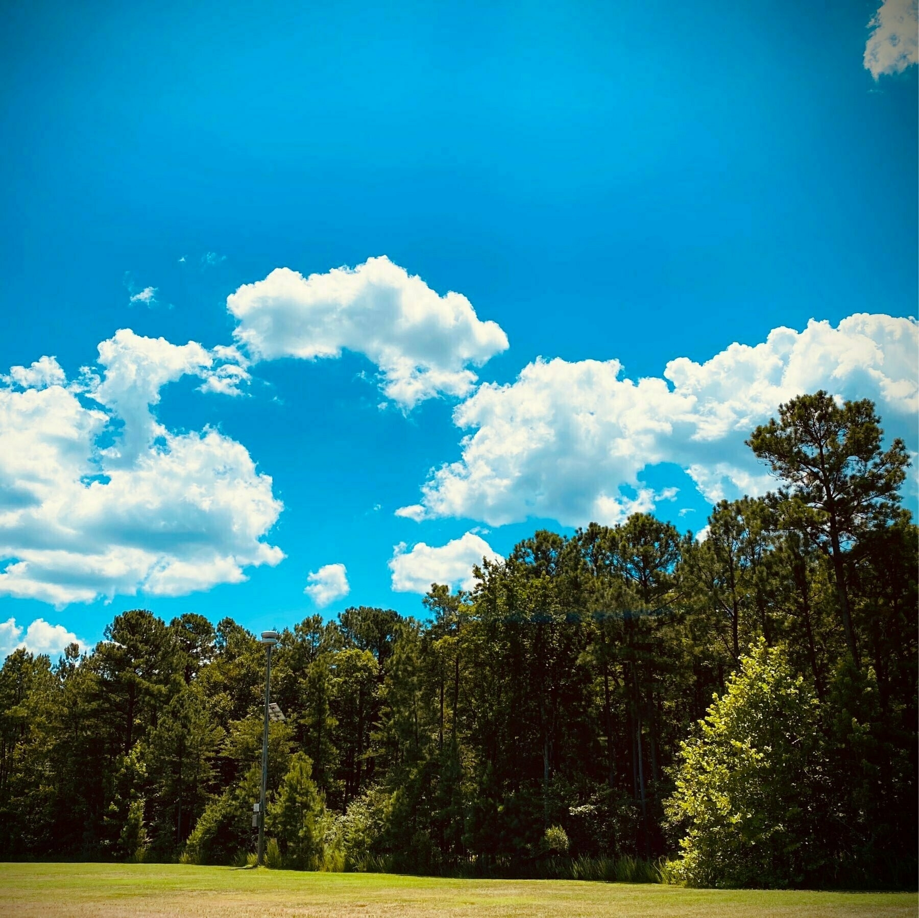 green trees with blue sky and white clouds