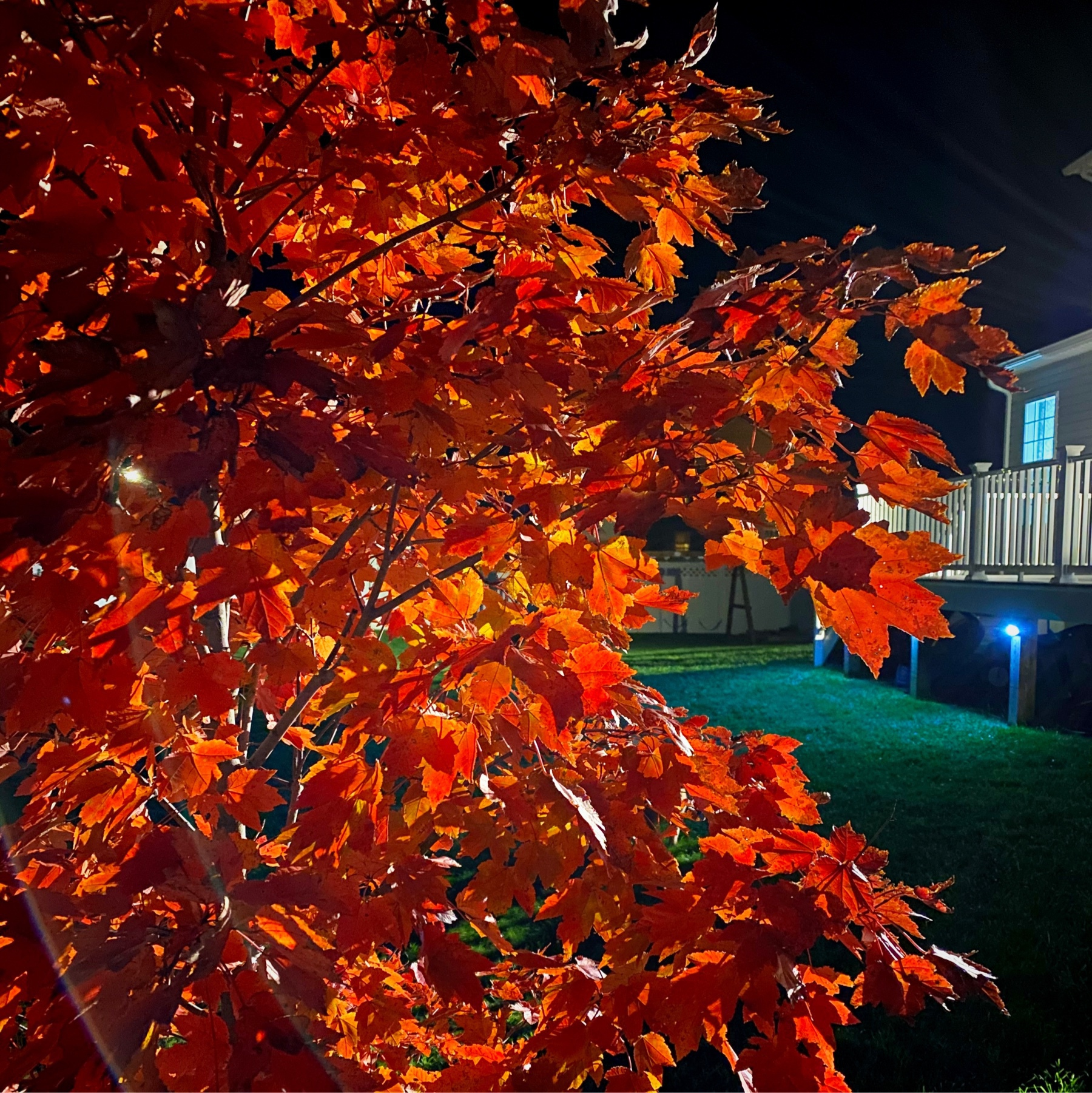 red leaves in darkness