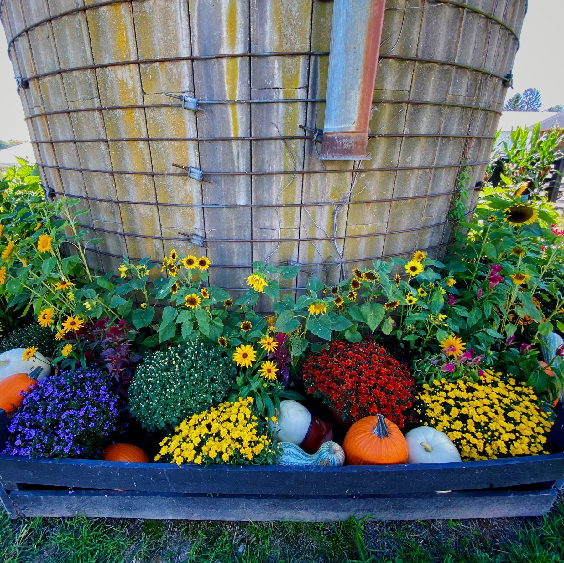 flower bed on a farm