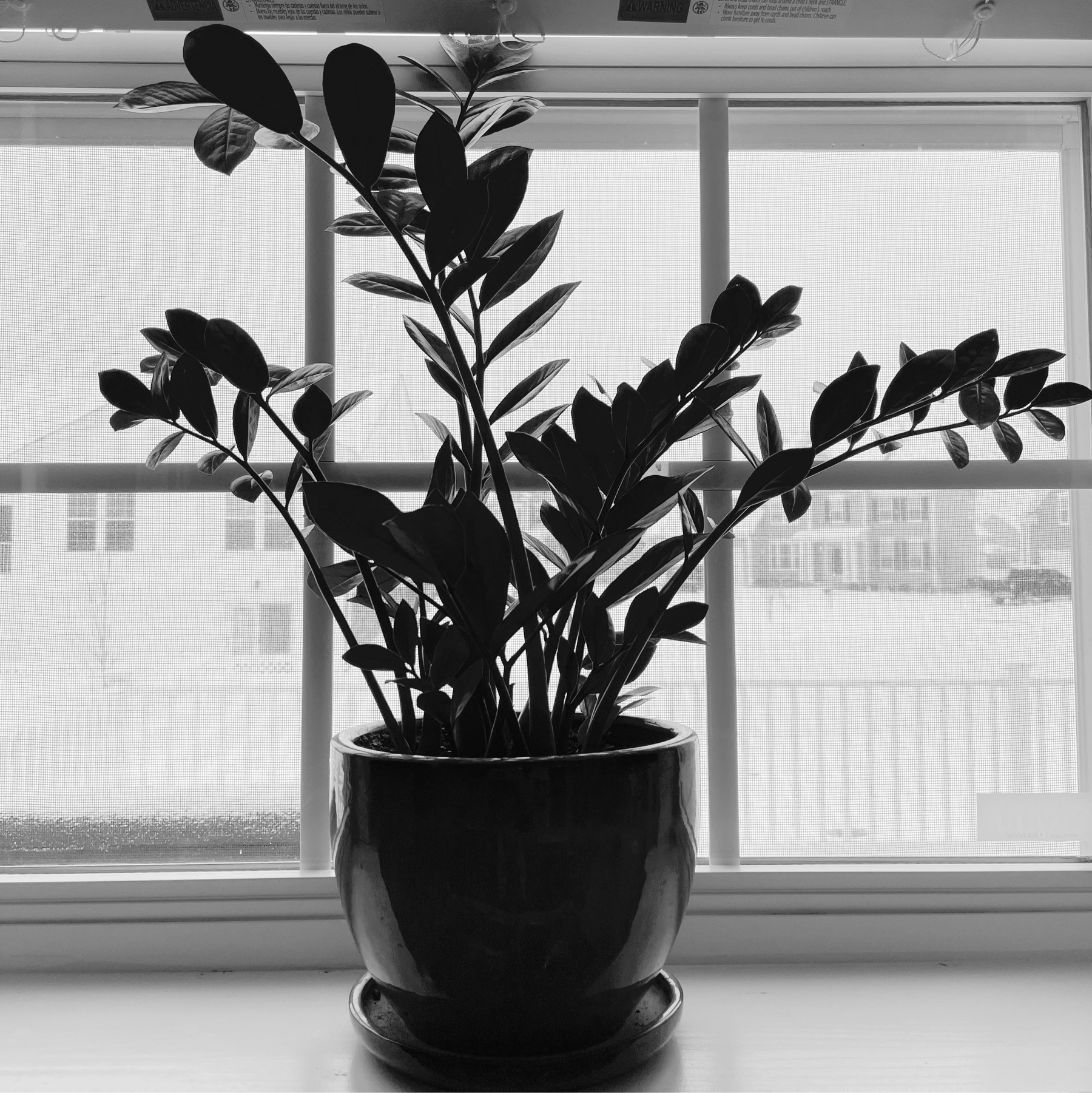 house plant in a window